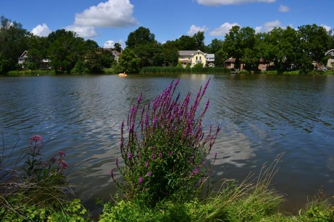 Flussufer sind beliebte Ziele der Forager.