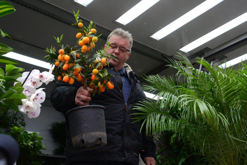 Der holländische Blumenkönig.