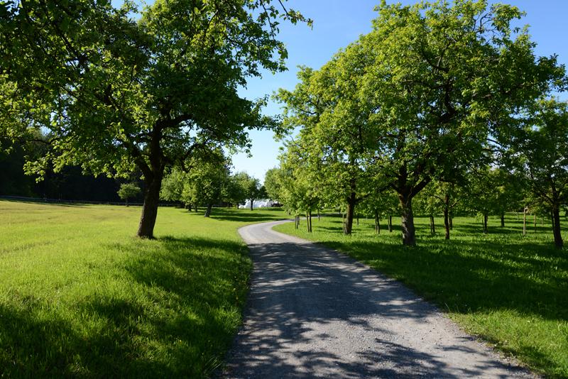 Gleich hinter dem Park der Oberwaid gibt es herrliche Spazierwege.