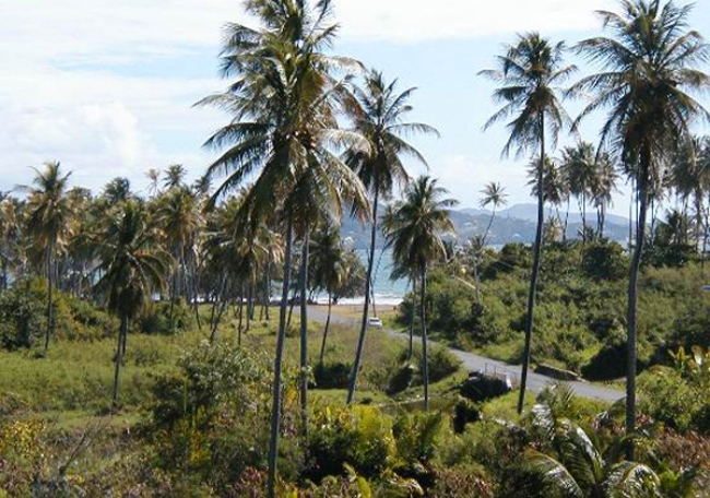 Atlantikstrand Tobago