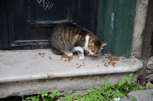 Istanbuler Straßenkatzen müssen nicht in Abfällen nach Essensresten wühlen. Hausbewohner versorgen sie täglich mit Trockenfutter.