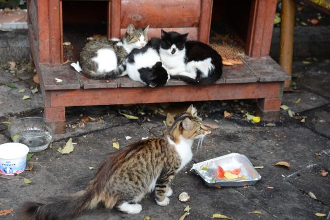 Kleine Katzenhütten in der Nähe des Topkapi-Palastes. Diese Katzen mögen Obst!