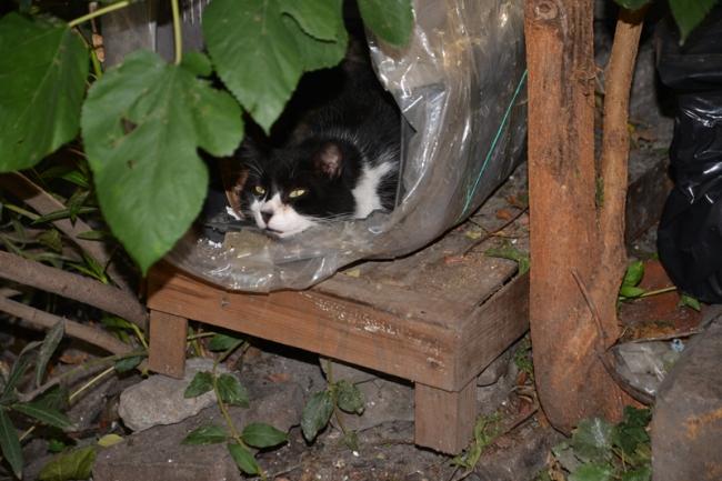 Istanbuler Straßenkatzen