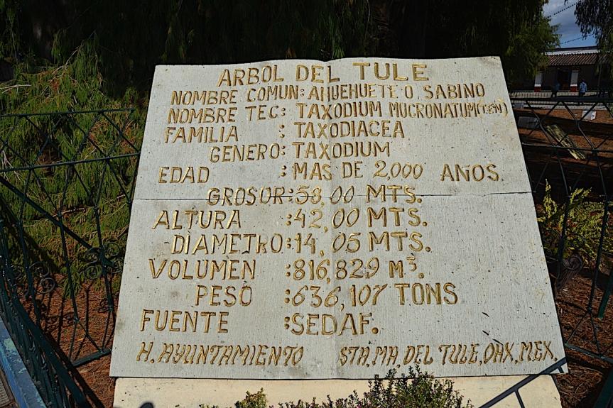 Arbol Tule 1