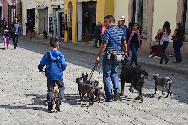 Oaxaca 18