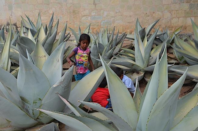 Oaxaca 8